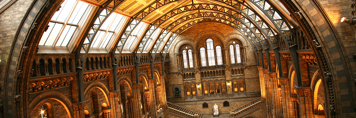 Experience a night at the museum at the Natural History Museum