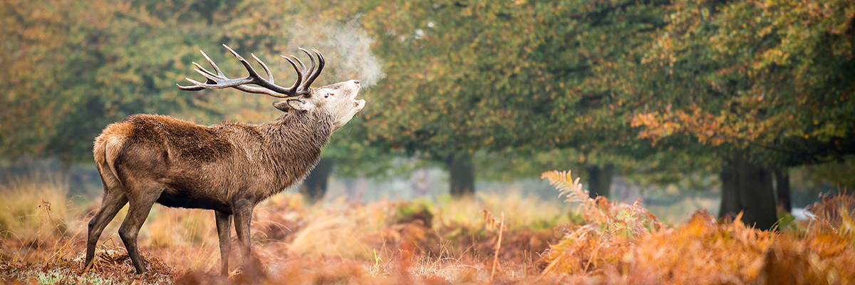 Escape to nature at Richmond Park
